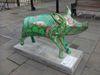 Pig69