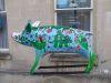 Pig58