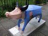 Pig43