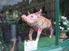 Pig65