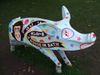 Pig62_1