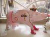 Pig73